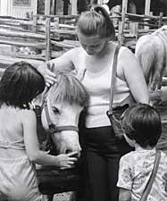 Toronto Island Horses Summer 1978